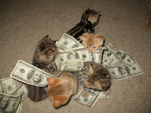 how to make money cat sitting