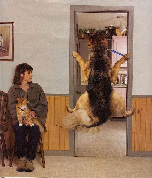 doorwaydog