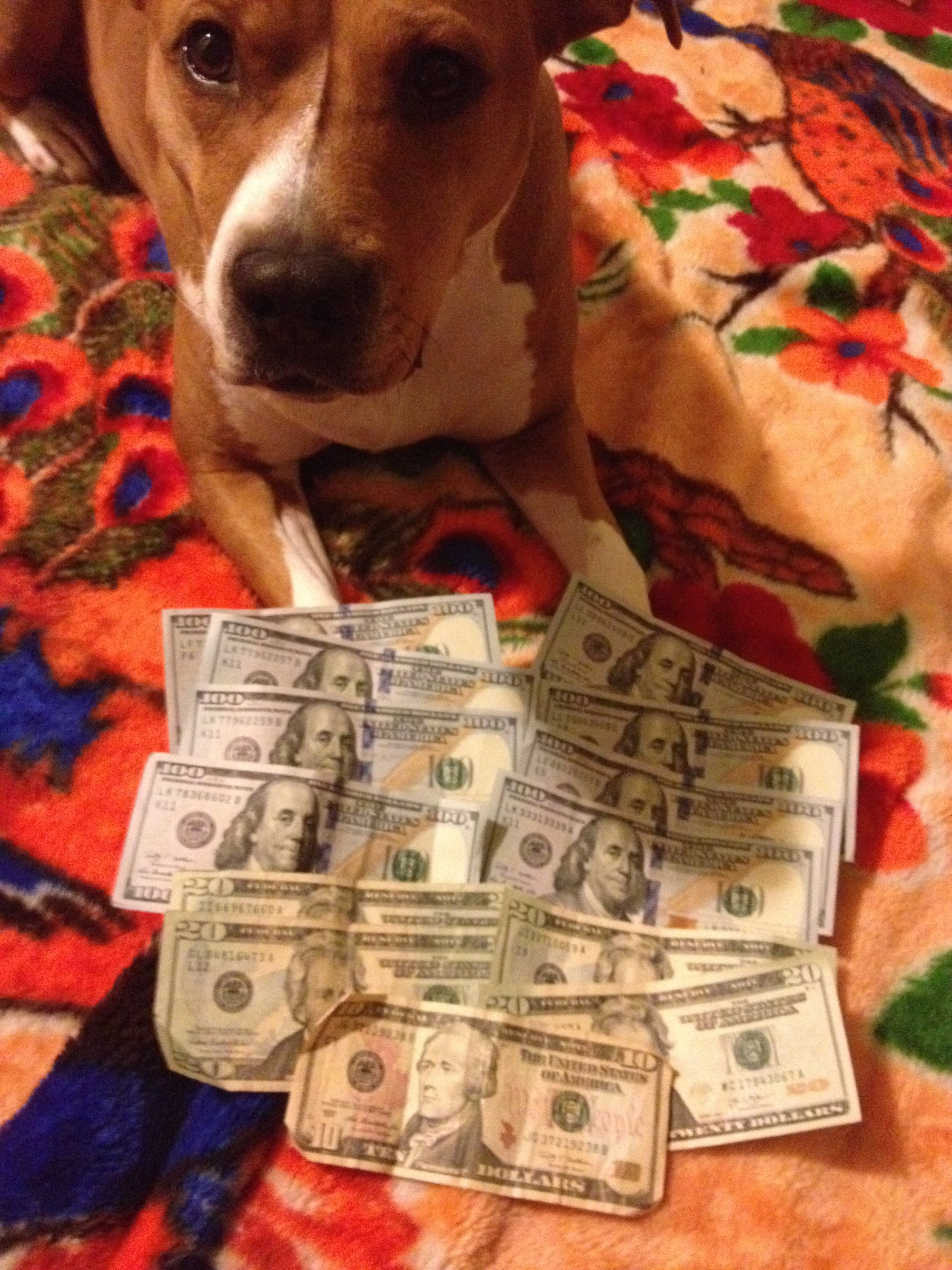 dulce the dog with dollars