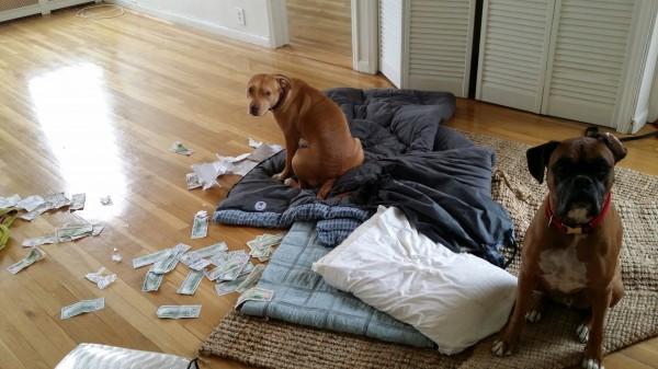 dogsanddollars