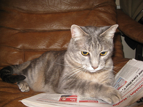 Bringing you the sex worker coverage you and your cat want to read since 2011. (Photo by jit bag via Flickr)